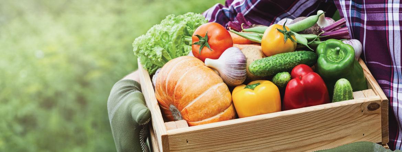 HBSL food supply mangement